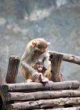 Mutter-Affe und Sohn Lizenzfreie Stockbilder