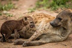 Mutter beschmutzte Hyäne mit einem Welpen Lizenzfreie Stockfotos