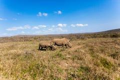 Mutter Cub des Rhinos verschönern landschaftlich Stockfotografie