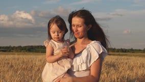 Mutter geht mit dem Baby in den Feldgriffährchen mit Weizen in der Hand kleine Tochter küsst Mutter auf einem Weizenfeld stock footage