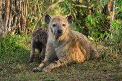 Mutter-Hyäne Lizenzfreie Stockfotos