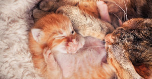 Mutter-Katze und Kätzchen Lizenzfreies Stockbild