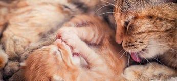 Mutter-Katze und Kätzchen Lizenzfreie Stockfotos