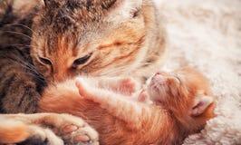 Mutter-Katze und Kätzchen Stockfoto