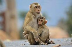 Mutter mit Babyaffen Lizenzfreies Stockfoto