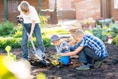 Mutter mit ihren Söhnen, die einen Baum pflanzen und zusammen ihn im Garten wässern Stockfotografie