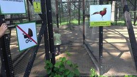 Mutter mit Kleinkindmädchenblick auf exotische seltene Vögel im Zookäfig stock video