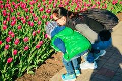 Mutter mit riechendem Tag der Tulpe des Sohns im Frühjahr Stockfotos