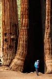 Mutter mit SäuglingsNationalpark besuch Mammutbaums in Kalifornien stockbild