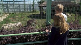 Mutter mit Sohn am Zoo, der Wolf betrachtet stock video footage