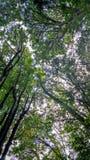 Mutter Natur Stockbilder
