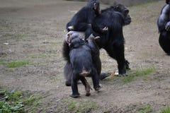 Mutter-und Baby-Affen Lizenzfreie Stockfotos