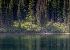 Mutter-und Baby-Elche über See stockbild