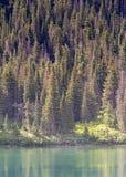 Mutter-und Baby-Elche auf See-Ufer lizenzfreie stockfotografie
