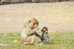 Mutter und Baby am prang mit Affen Lizenzfreie Stockfotos