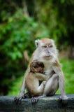 Mutter und ihr Schätzchen Stockbild