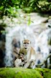Mutter und ihr Schätzchen Lizenzfreie Stockfotografie