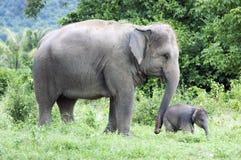 Mutter und ihr Schätzchenelefant Stockfotos