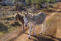 Mutter und junger Esel Stockfoto