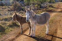 Mutter und junger Esel Lizenzfreie Stockbilder
