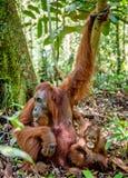 Mutter und Junges in einem natürlichen Lebensraum Stockfoto