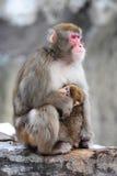Mutter und Junges, Winter. Japanische Macaques. Gruppe P Stockfotografie
