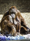 Mutter und Kind Bornean Stockfotos