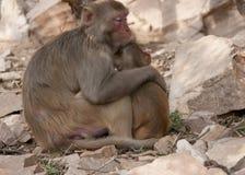Mutter und Kind in der schützenden Geste Stockbild