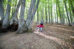 Mutter und Kind, die im Wald von Kastanienbäumen im Herbst wandern Stockfotografie
