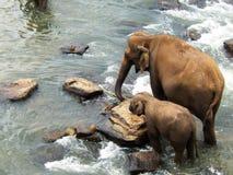 Mutter und kinder- Ellies von Pinnawala Lizenzfreie Stockbilder