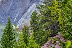 Mutter-und Kindergebirgsziegen warten heraus den Regen-Glacier Nationalpark lizenzfreie stockbilder
