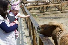 Mutter und Schätzchen, die das Pony speisen Stockbild