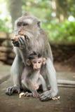 Mutter und Schätzchen monkey das Essen Lizenzfreies Stockbild