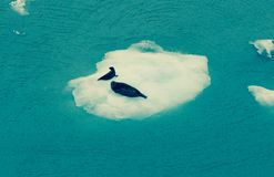 Mutter und Seehundbaby auf einem Eisberg Lizenzfreies Stockfoto