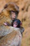 Mutter und Sohn Stockfoto
