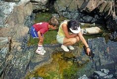 Mutter und Sohn, die Gezeitenpools betrachten stockbilder