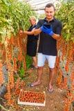 Mutter und Sohn mit Tablette überprüfen on-line-Bestellungen der Ernte der Kirschtomate im Gewächshausfamilienunternehmen stockbilder