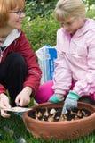 Mutter und Tochter, die Tulpen pflanzen Stockbild