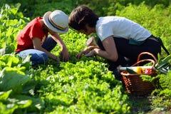 Mutter und Tochter im Gemüsegarten Lizenzfreies Stockbild