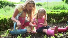 Mutter-und Tochter-Sammeln-Rettich auf Zuteilung stock footage
