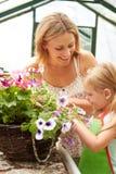 Mutter-und Tochter-wachsende Anlagen im Gewächshaus Lizenzfreie Stockfotos