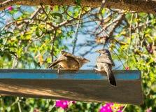 Mutter und Vogelbaby stockfoto
