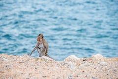 Mutteraffe, der auf dem Sand sitzt Lizenzfreies Stockfoto