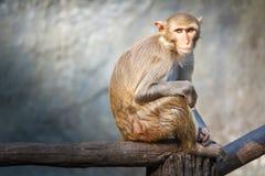 Mutteraffe, der auf einem Baumast sitzt Lizenzfreies Stockbild