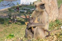 Mutteraffe, der ihrem Baby eine Banane einzieht stockfotografie