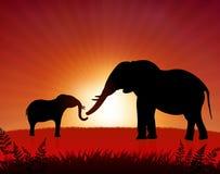 Mutterelefant mit Schätzchen auf Sonnenunterganghintergrund Lizenzfreie Stockfotos
