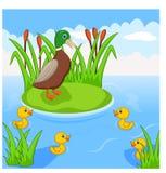 Mutterentenschwimmen mit ihren vier kleinen netten Entlein im Fluss stock abbildung