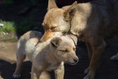 Mutterhund und sein Baby Stockfotos