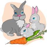 Mutterkaninchen und nette Häschen drei Kaninchen und eine Karotte vektor abbildung