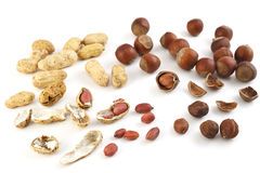 Muttern eine Haselnuss und eine Erdnuss in einem Shell Lizenzfreies Stockbild